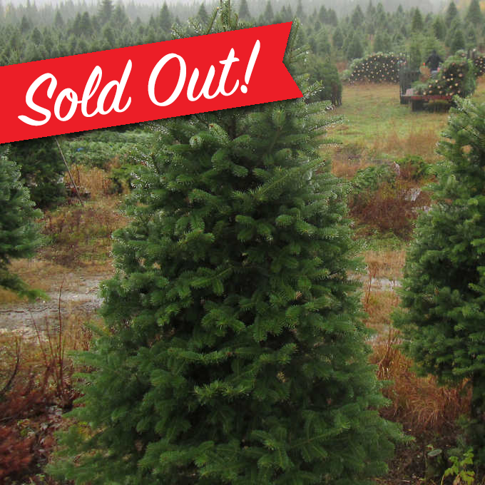 Boston Christmas Tree Delivery: OUT OF STOCK: Nova Scotia Natural Christmas Tree